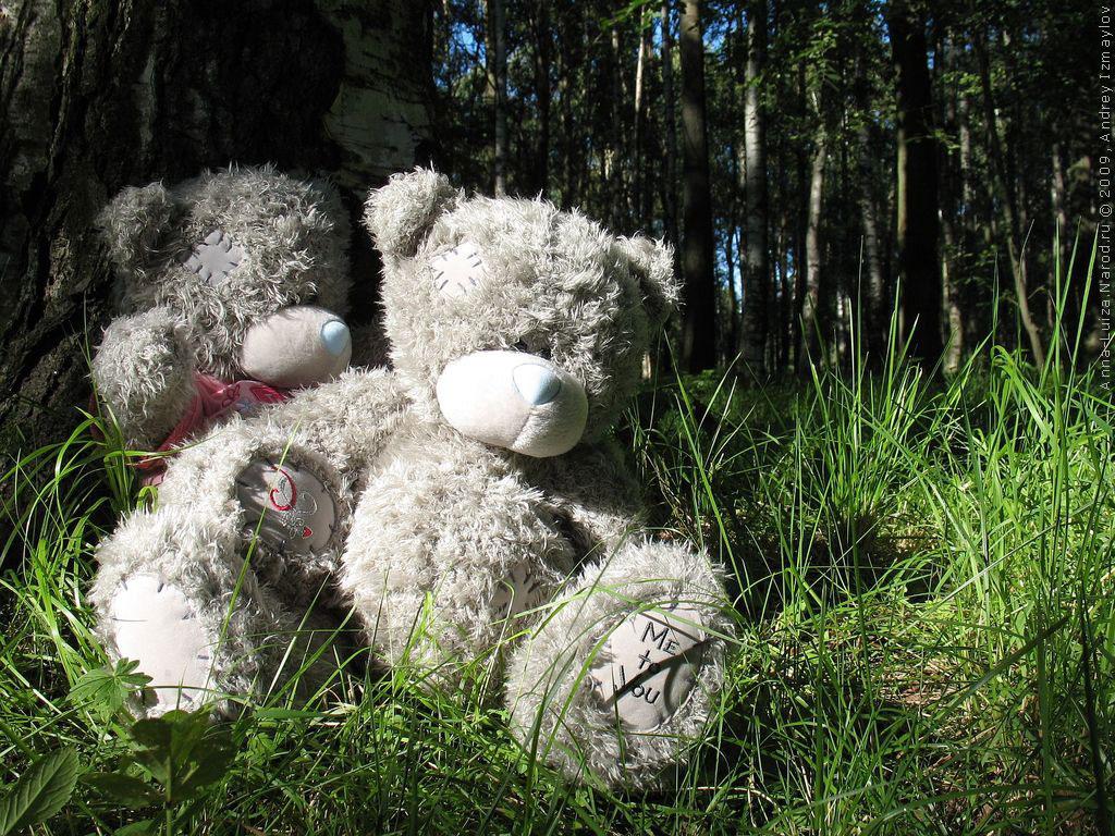 Игрушка мишка Тедди, фото большого размера с мишками Тедди: http://anna-luiza.narod.ru/oboi-foto-mishki-teddi-kartinki-110.html