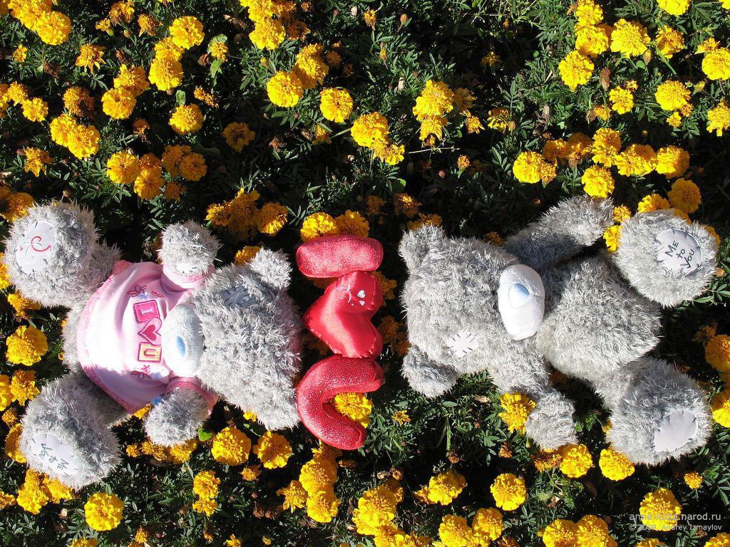 Тедди мишка обои